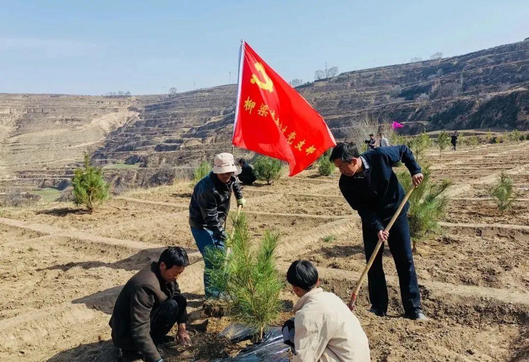 甘肃庄浪县柳梁梯田党旗红 生态绿植谋发展—生态造林纪实